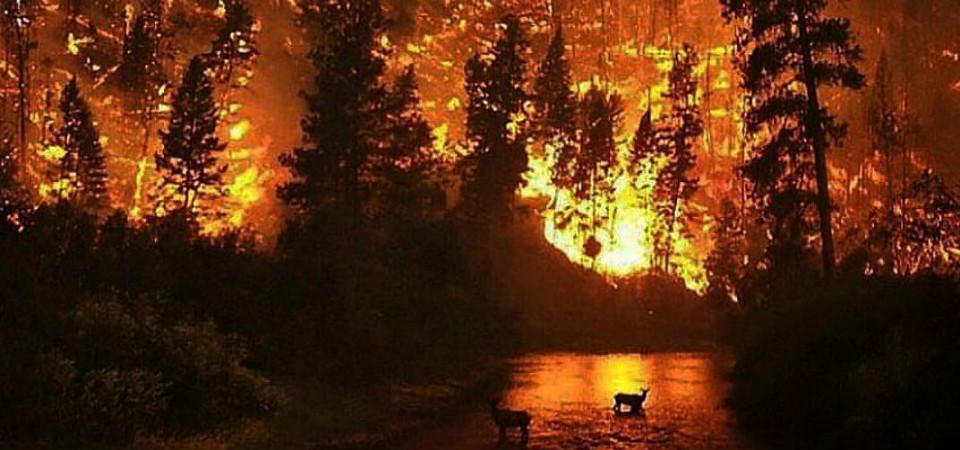 Tragédia Natural | Imagem: Nalu Pelo Mundo
