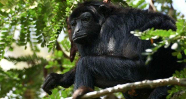 Blog do Lawrence | Cada macaco no seu galho