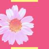 Outubro Rosa: como surgiu e porque a campanha é tão importante
